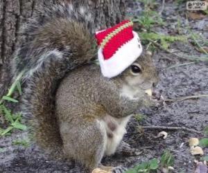 Puzzle Écureuil avec le chapeau de père Noël