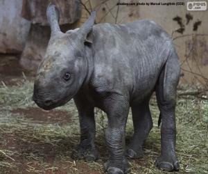 Puzzle Élevage de rhinocéros noirs