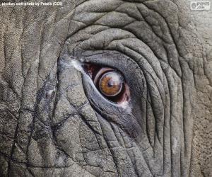 Puzzle Œil de l'éléphant