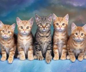 Puzzle 5 chats avec de longues moustaches à la recherche avance