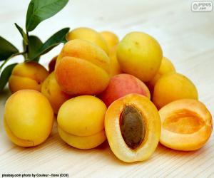 Puzzle Abricots