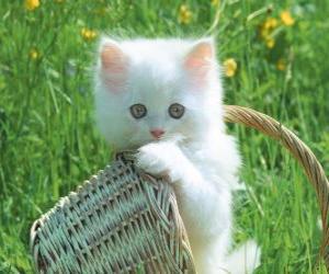 Puzzle Adorable chaton blanc