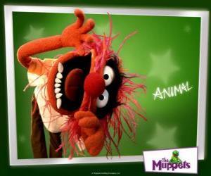 Puzzle Animal, le batteur fou de la bande du Muppet Show est un homme primitif
