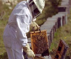 Puzzle Apiculteur travailant avec le vêtement spécial dans la ruche pour recueillir le miel