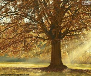 Puzzle Arbre à feuilles caduques en automne