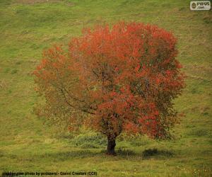 Puzzle Arbre en automne