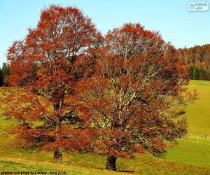 Jeux de puzzle de arbres casse t tes - Arbres a feuilles caduques ...