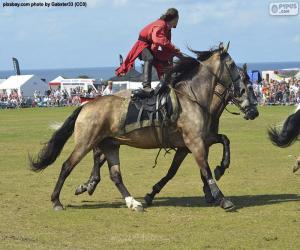 Puzzle Astuces d'équitation