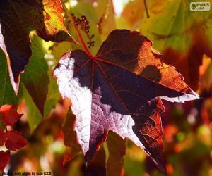 Puzzle Automne dans le vignoble