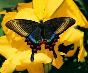 Puzzle Beau papillon sur une fleur jaune