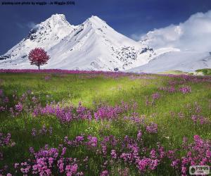 Puzzle Beaux paysages des Alpes