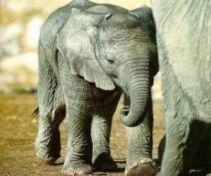 Puzzle Bébé éléphant avec sa mère