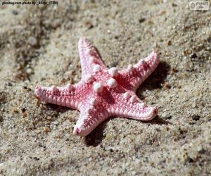 Puzzle Belle étoile de mer