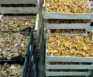 Puzzle Boîtes de champignons