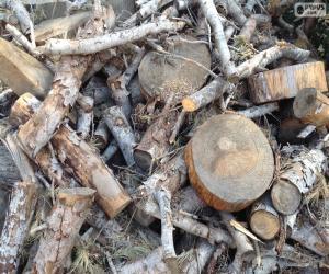 Jeux de puzzle de arbres casse t tes - Arbre fruitier comme bois de chauffage ...