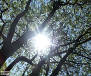 Puzzle Branches et soleil