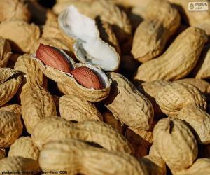 Puzzle Cacahuètes en coque