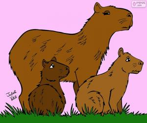 Puzzle Capybara, Julieta Vitali