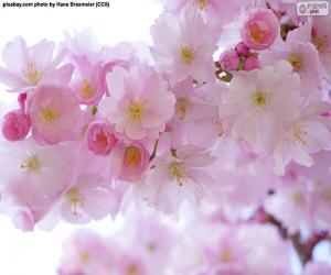 Puzzle Cerisiers en fleurs