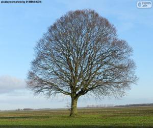 Puzzle Chêne en automne