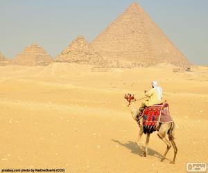 Puzzle Chameau devant les pyramides