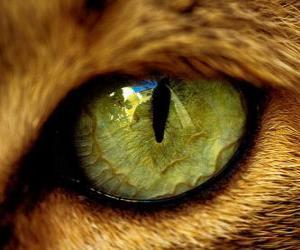 Puzzle chat aux yeux verts