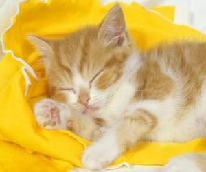 Puzzle Chat dormait paisiblement