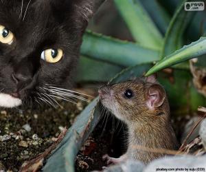 Puzzle Chat et souris