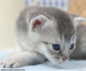 Puzzle Chat gris yeux bleus