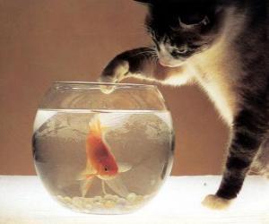 Puzzle Chat regardant un poisson
