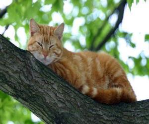 Puzzle Chat reposant sur la branche d'un arbre