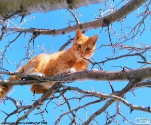 Puzzle Chat sur une branche
