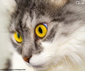 Puzzle Chat yeux jaunes