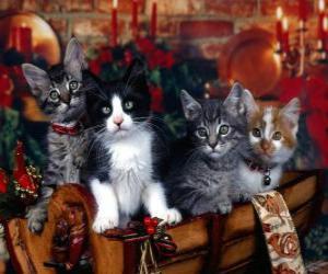 Puzzle Chatons mignons sur le jour de Noël