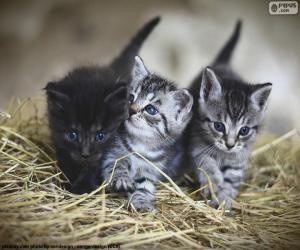 Puzzle Chatons mignons