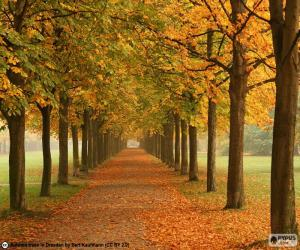 Puzzle Chemin entre arbres en automne