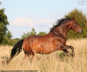 Puzzle Cheval brun courant