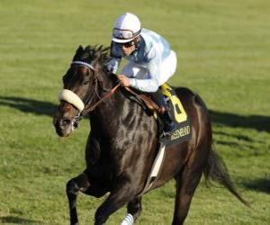 Puzzle Cheval et jockey sur une course de chevaux à l'hippodrome