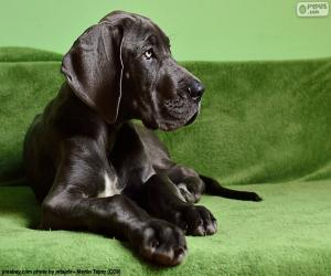 Puzzle Chiot Dogue Allemand