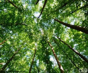 Puzzle Cime des arbres