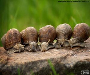 Puzzle Cinq escargots