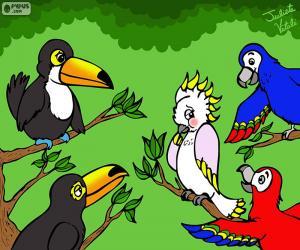 Puzzle Cinq oiseaux de Julieta Vitali