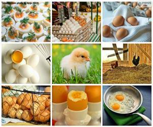 Puzzle Collage de le œuf à la poule