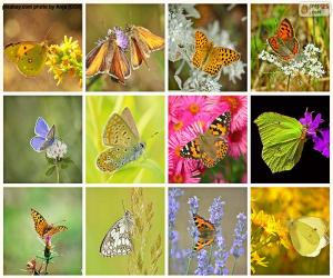 Puzzle Collage de papillons