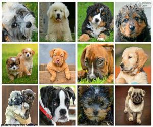 Puzzle Collage des chiens