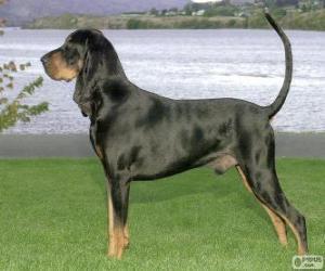 Puzzle Coonhound Bronze et noir