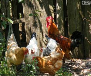 Puzzle Coq et poules