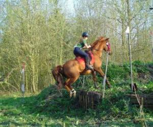Puzzle Cours technique équestre de la concurrence, teste la compréhension entre le cheval et le cavalier à travers différentes épreuves.