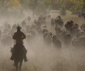 Puzzle Cowboy conduisant un troupeau
