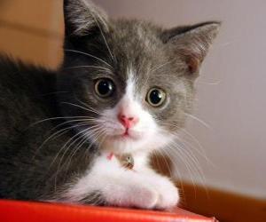 Puzzle Cute chaton